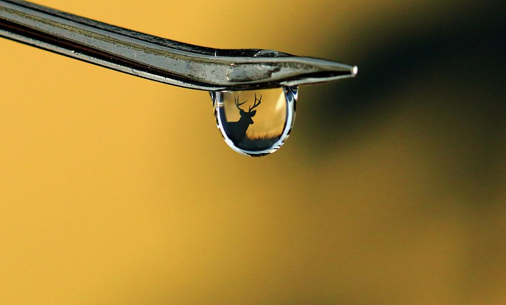 Macro gota de agua